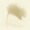 A szélhárfa dallamai